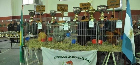Se realizará la 26°exposición avícola de General La Madrid